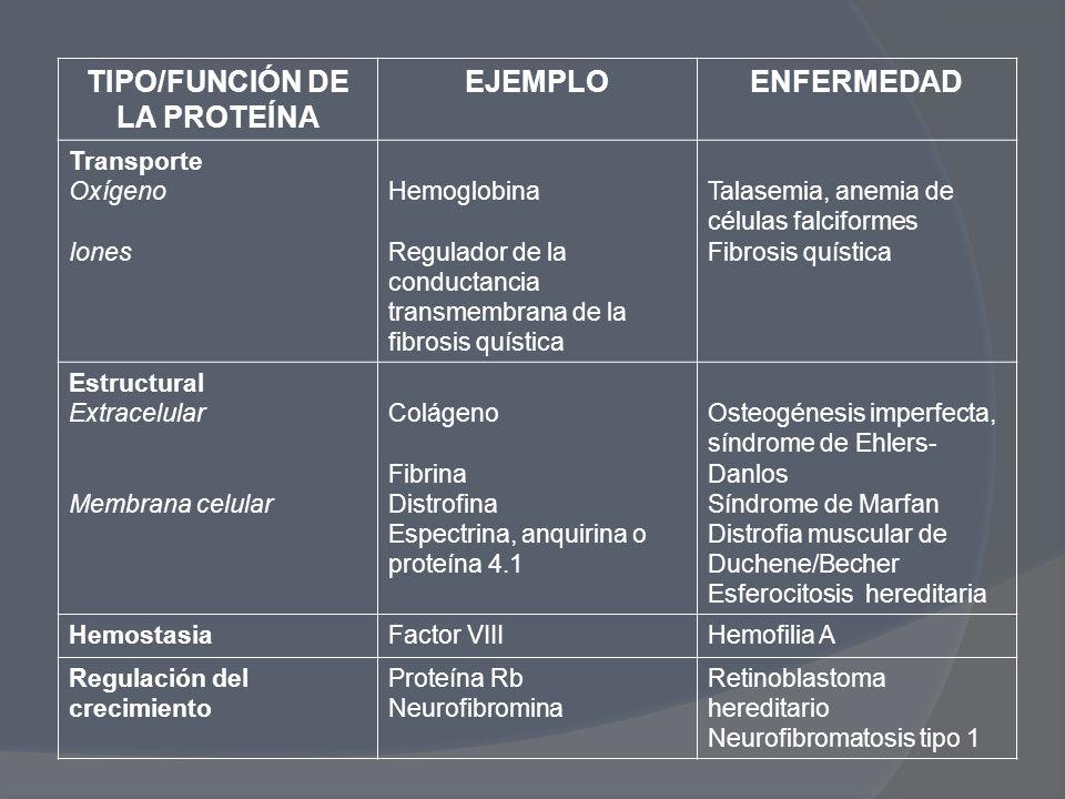 TIPO/FUNCIÓN DE LA PROTEÍNA