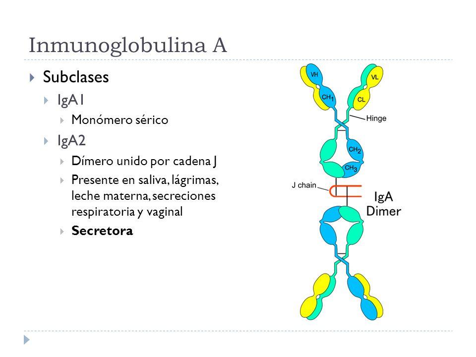 Inmunoglobulina A Subclases IgA1 IgA2 Monómero sérico