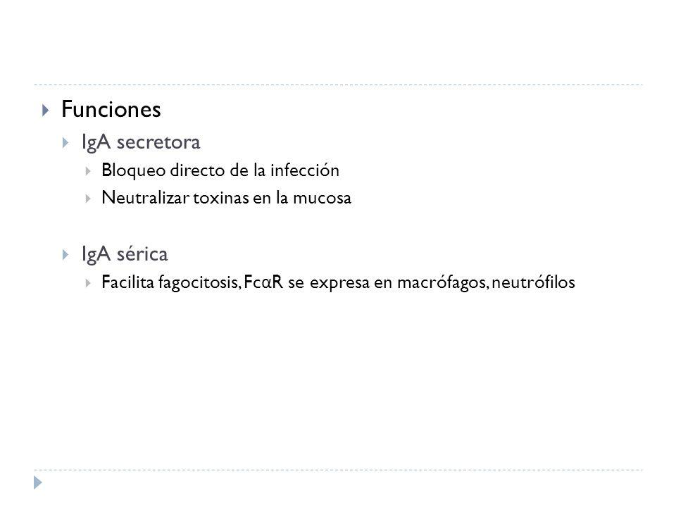 Funciones IgA secretora IgA sérica Bloqueo directo de la infección