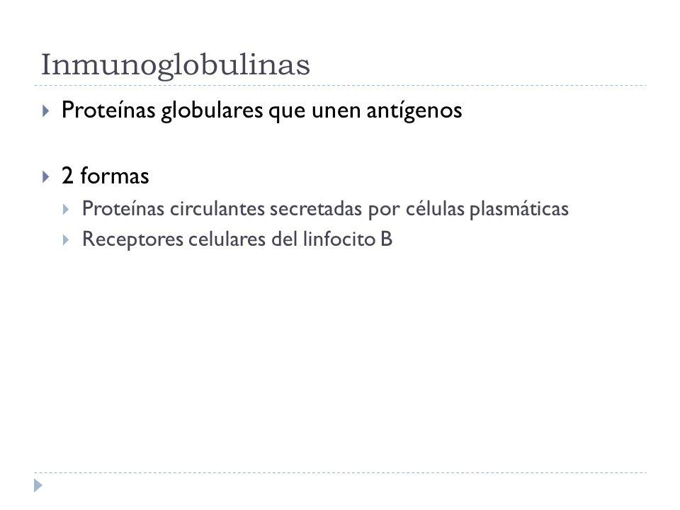 Inmunoglobulinas Proteínas globulares que unen antígenos 2 formas