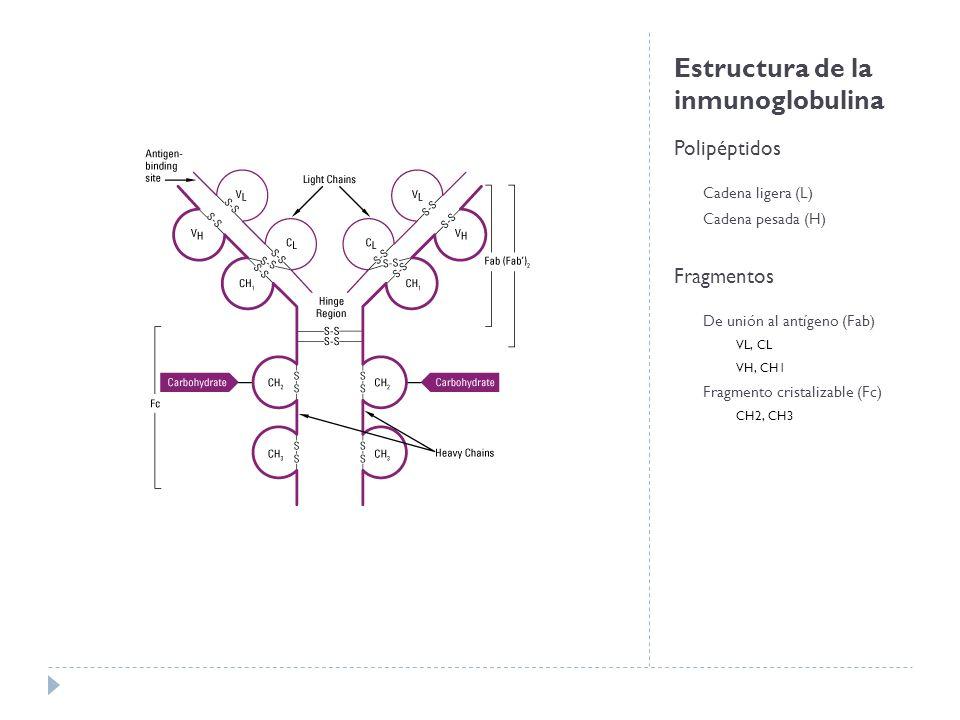 Estructura de la inmunoglobulina
