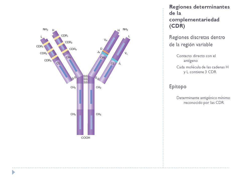 Regiones determinantes de la complementariedad (CDR)