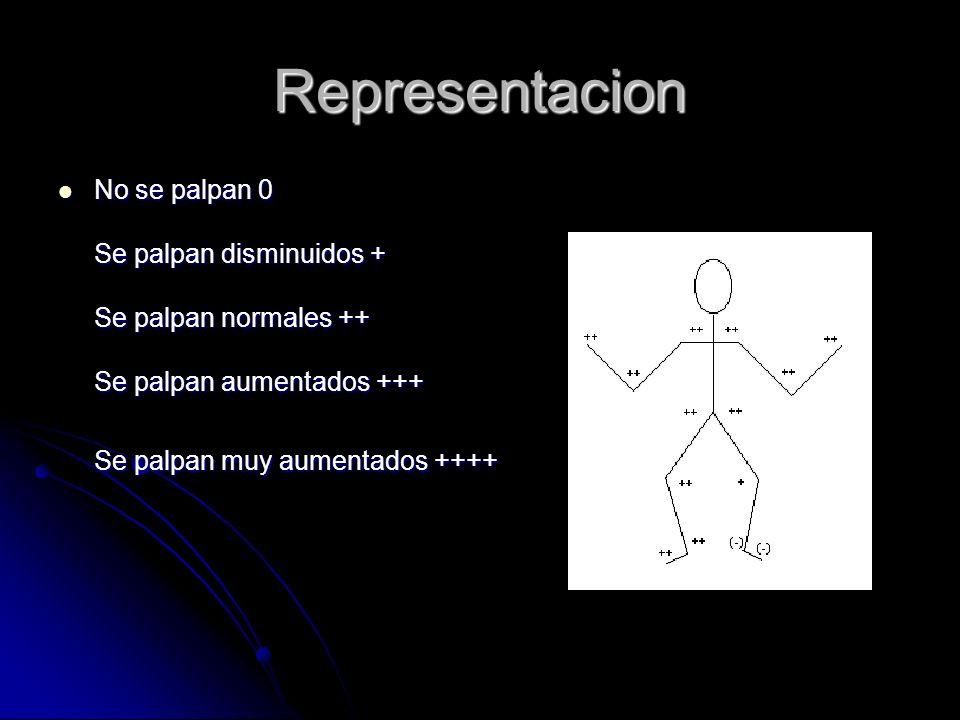 Representacion No se palpan 0 Se palpan disminuidos + Se palpan normales ++ Se palpan aumentados +++ Se palpan muy aumentados ++++