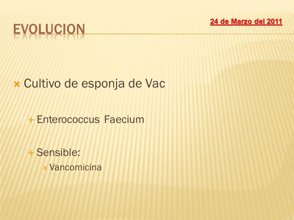 EVOLUCION Cultivo de esponja de Vac Enterococcus Faecium Sensible: