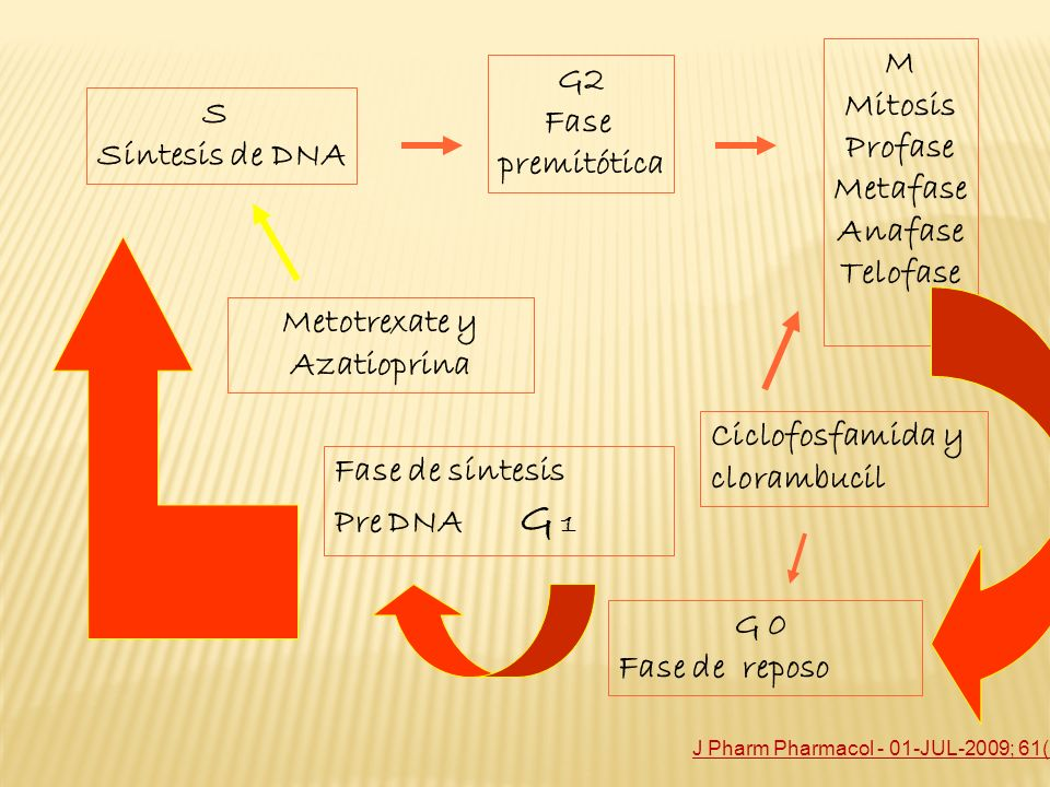 Metotrexate y Azatioprina
