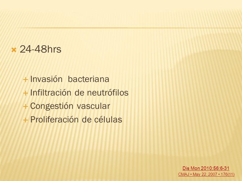 24-48hrs Invasión bacteriana Infiltración de neutrófilos