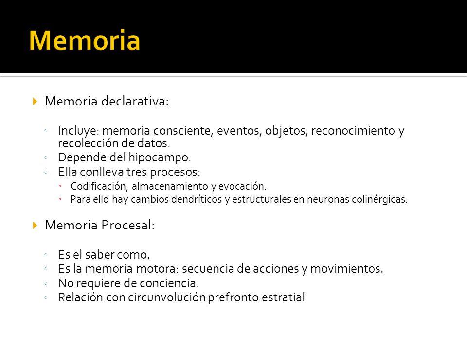 Memoria Memoria declarativa: Memoria Procesal: