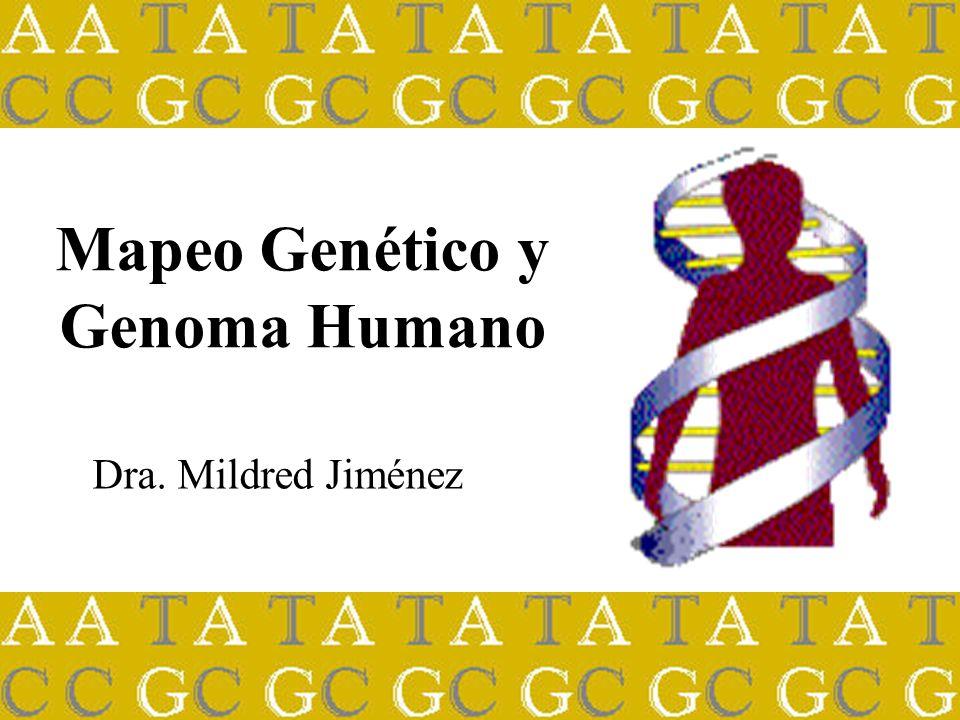 Mapeo Genético y Genoma Humano