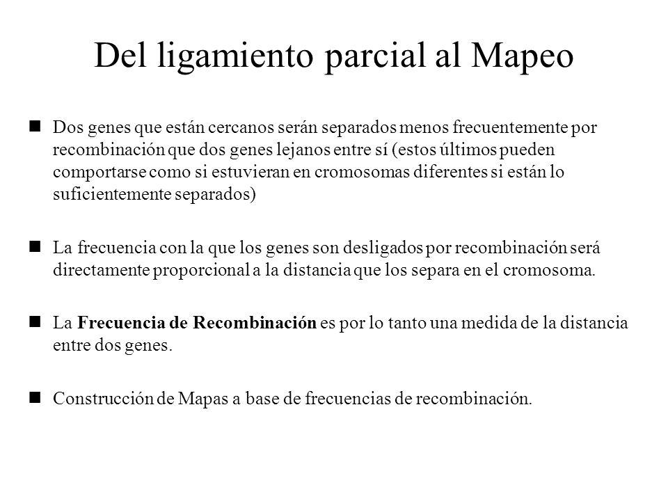 Del ligamiento parcial al Mapeo