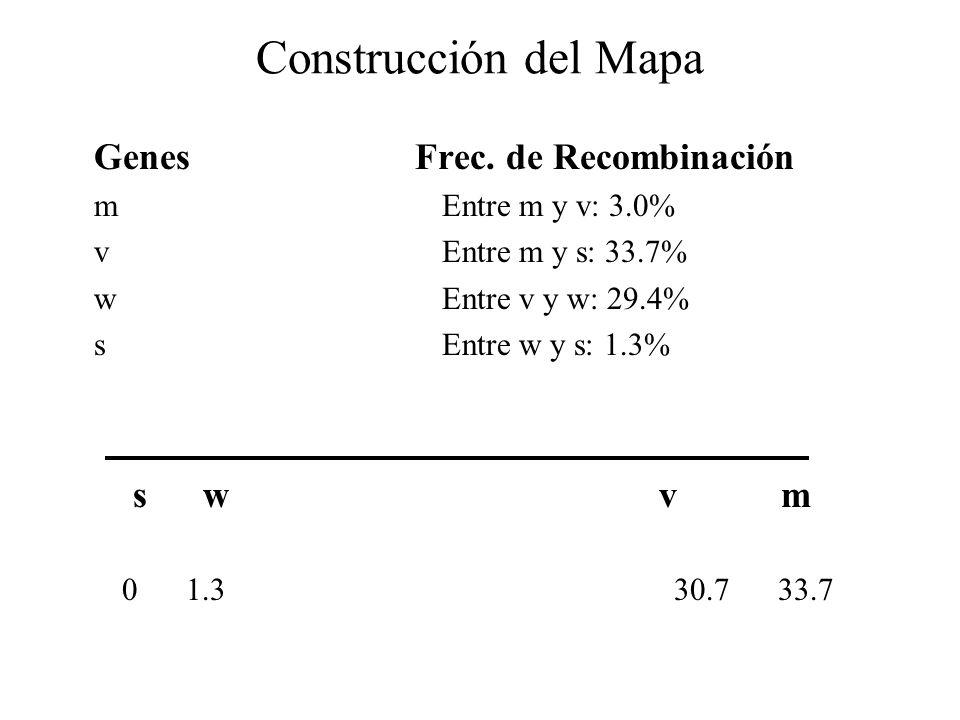 Construcción del Mapa Genes Frec. de Recombinación s w v m