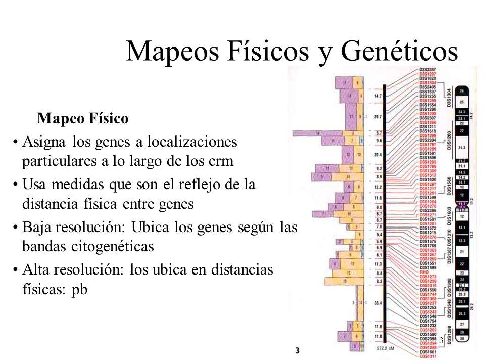 Mapeos Físicos y Genéticos