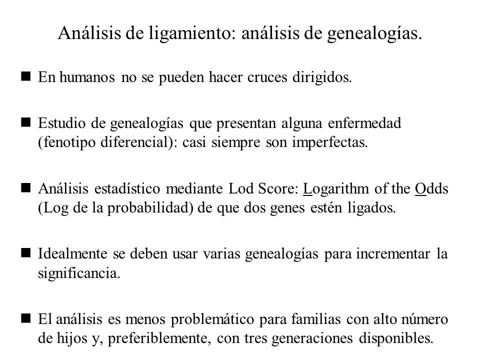 Análisis de ligamiento: análisis de genealogías.