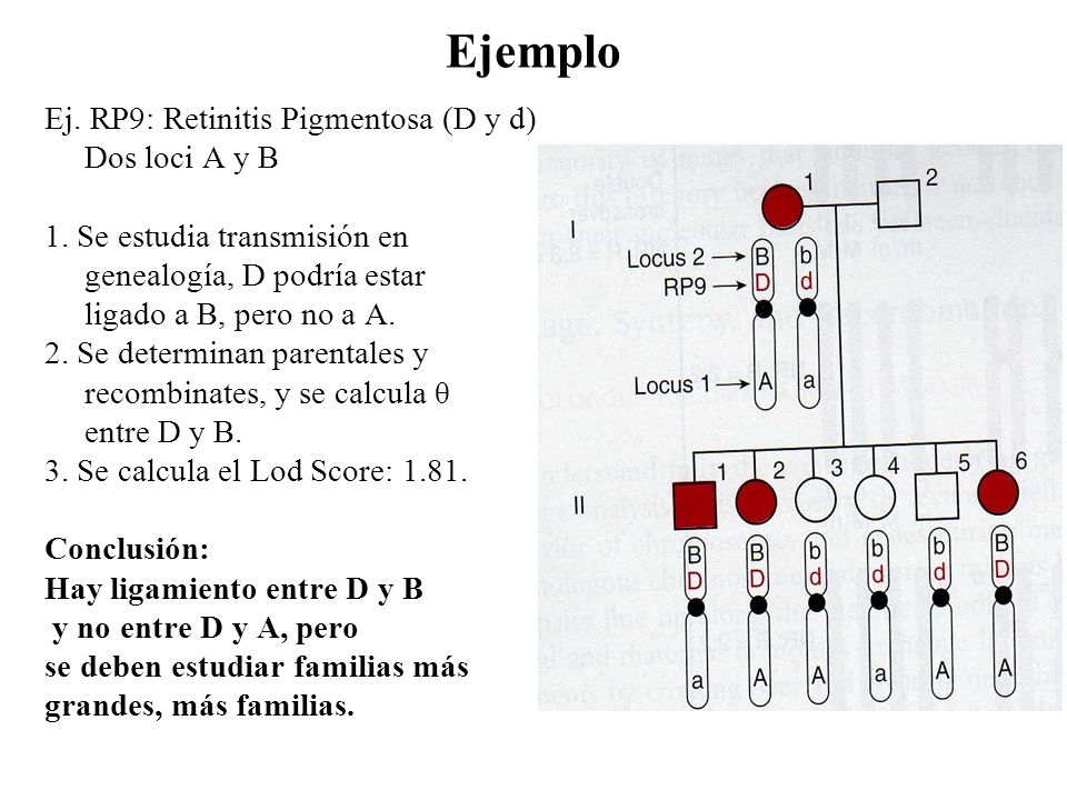 Ejemplo Ej. RP9: Retinitis Pigmentosa (D y d) Dos loci A y B