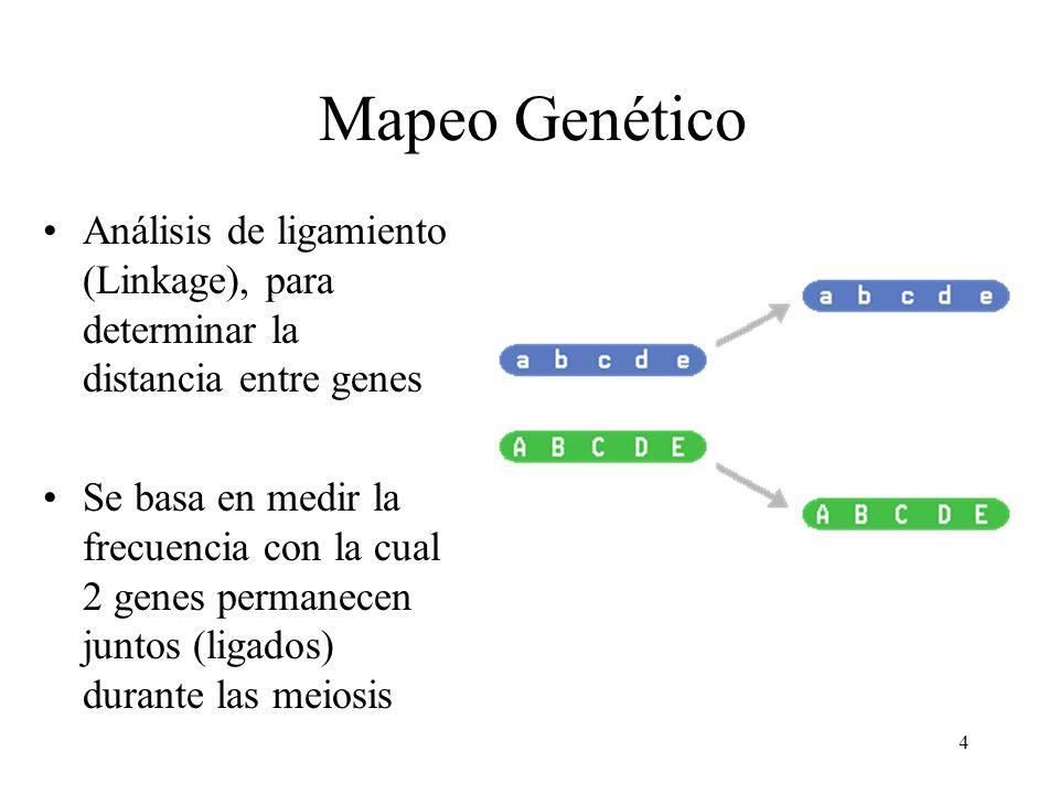 Mapeo Genético Análisis de ligamiento (Linkage), para determinar la distancia entre genes.