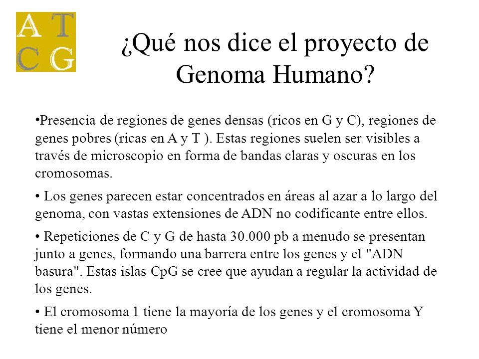 ¿Qué nos dice el proyecto de Genoma Humano