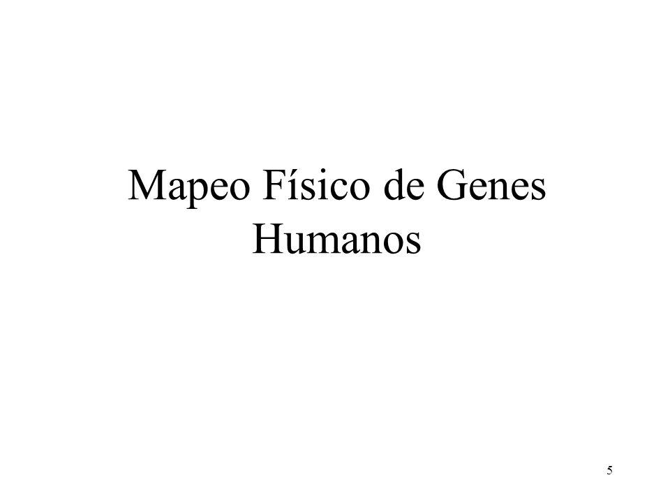 Mapeo Físico de Genes Humanos