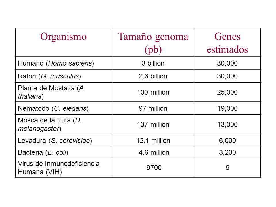 Organismo Tamaño genoma (pb) Genes estimados Humano (Homo sapiens)