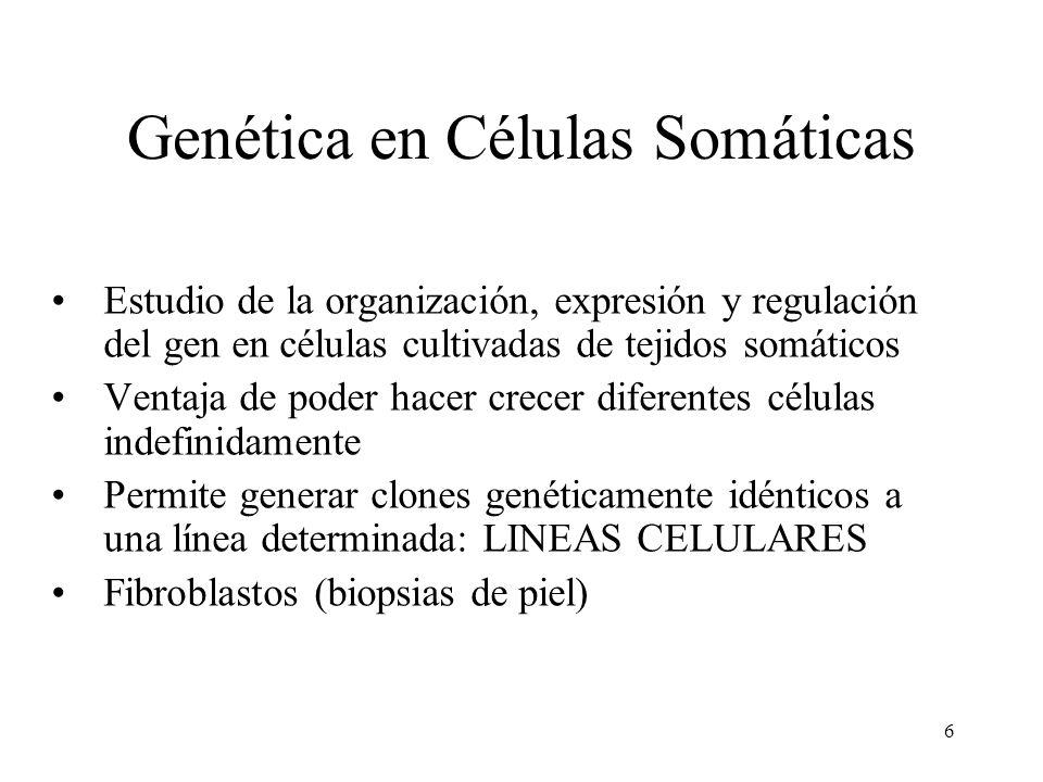 Genética en Células Somáticas