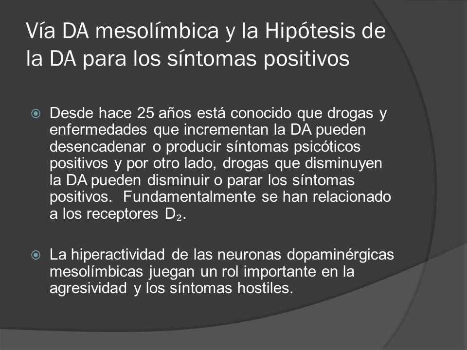 Vía DA mesolímbica y la Hipótesis de la DA para los síntomas positivos