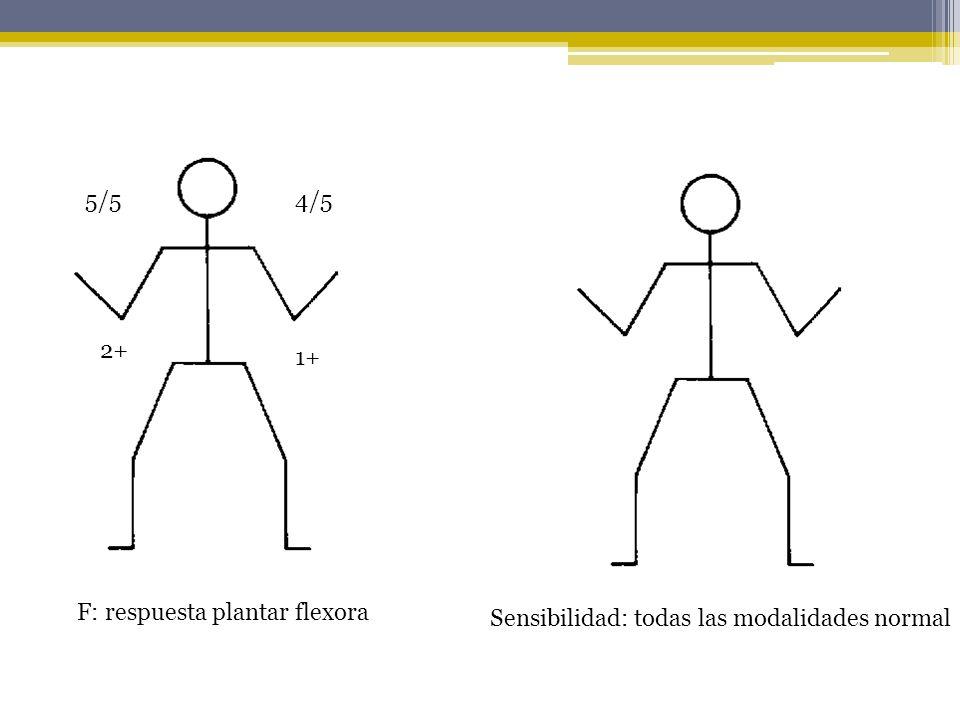 5/5 4/5 2+ 1+ F: respuesta plantar flexora Sensibilidad: todas las modalidades normal