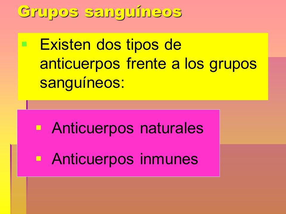 Grupos sanguíneos Existen dos tipos de anticuerpos frente a los grupos sanguíneos: Anticuerpos naturales.