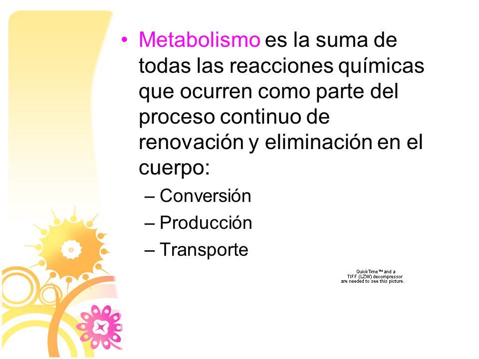 Metabolismo es la suma de todas las reacciones químicas que ocurren como parte del proceso continuo de renovación y eliminación en el cuerpo:
