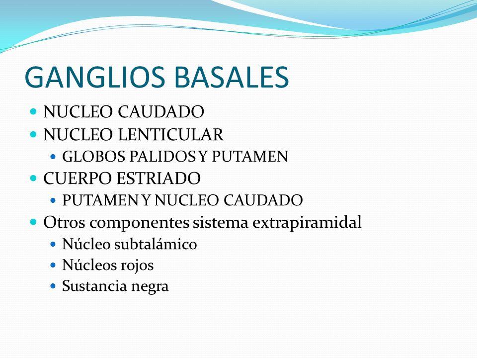 GANGLIOS BASALES NUCLEO CAUDADO NUCLEO LENTICULAR CUERPO ESTRIADO