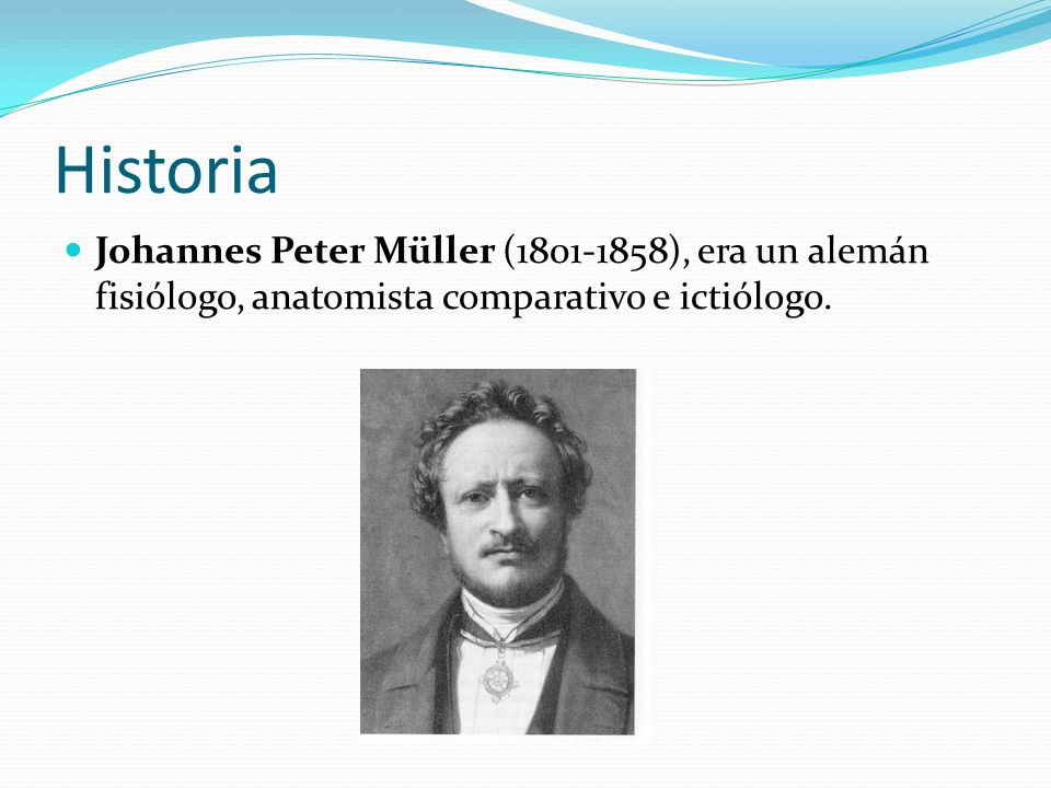 HistoriaJohannes Peter Müller (1801-1858), era un alemán fisiólogo, anatomista comparativo e ictiólogo.