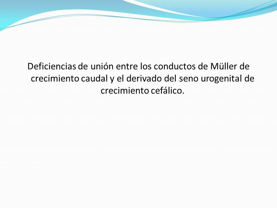 Deficiencias de unión entre los conductos de Müller de crecimiento caudal y el derivado del seno urogenital de crecimiento cefálico.