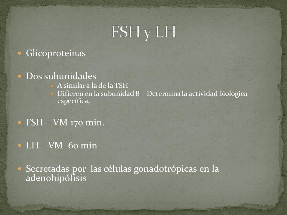 FSH y LH Glicoproteínas Dos subunidades FSH – VM 170 min.