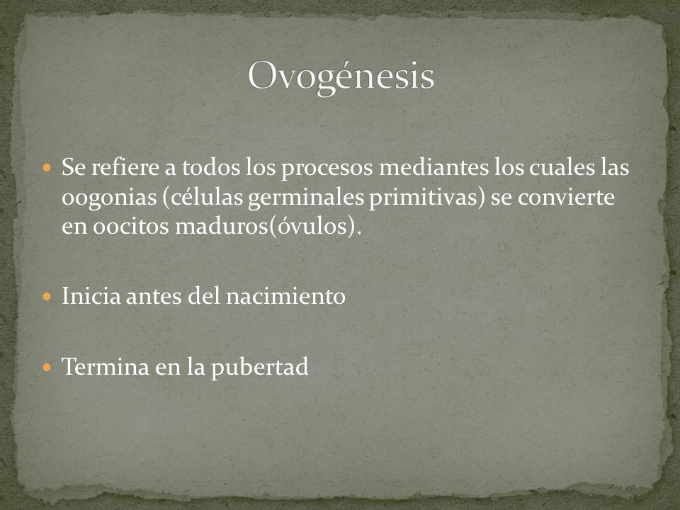 Ovogénesis