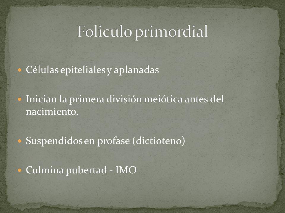 Foliculo primordial Células epiteliales y aplanadas