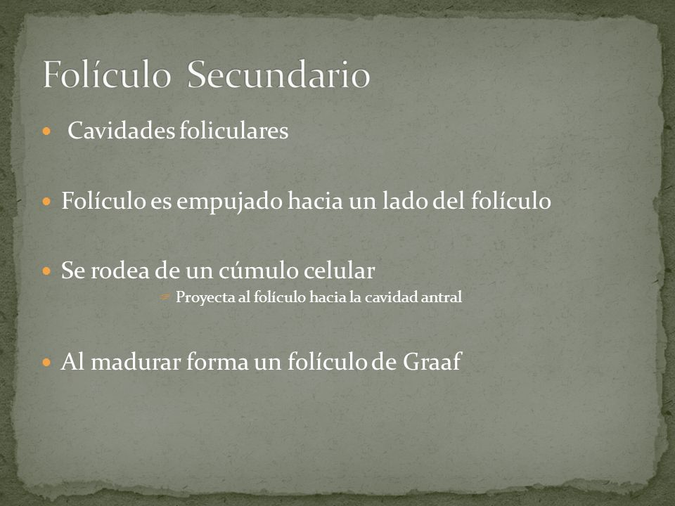 Folículo Secundario Cavidades foliculares