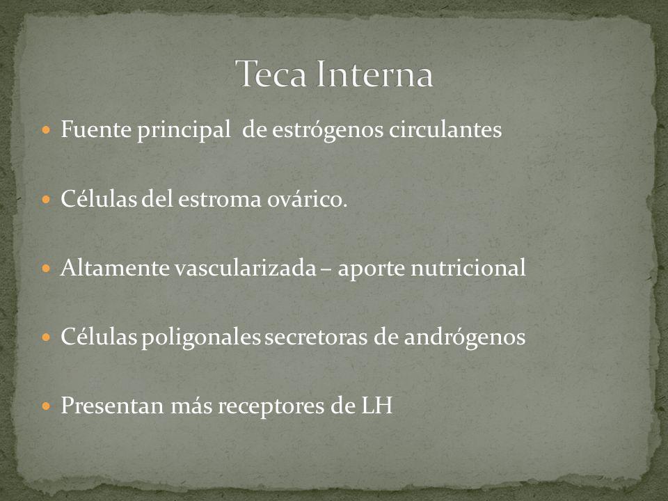Teca Interna Fuente principal de estrógenos circulantes