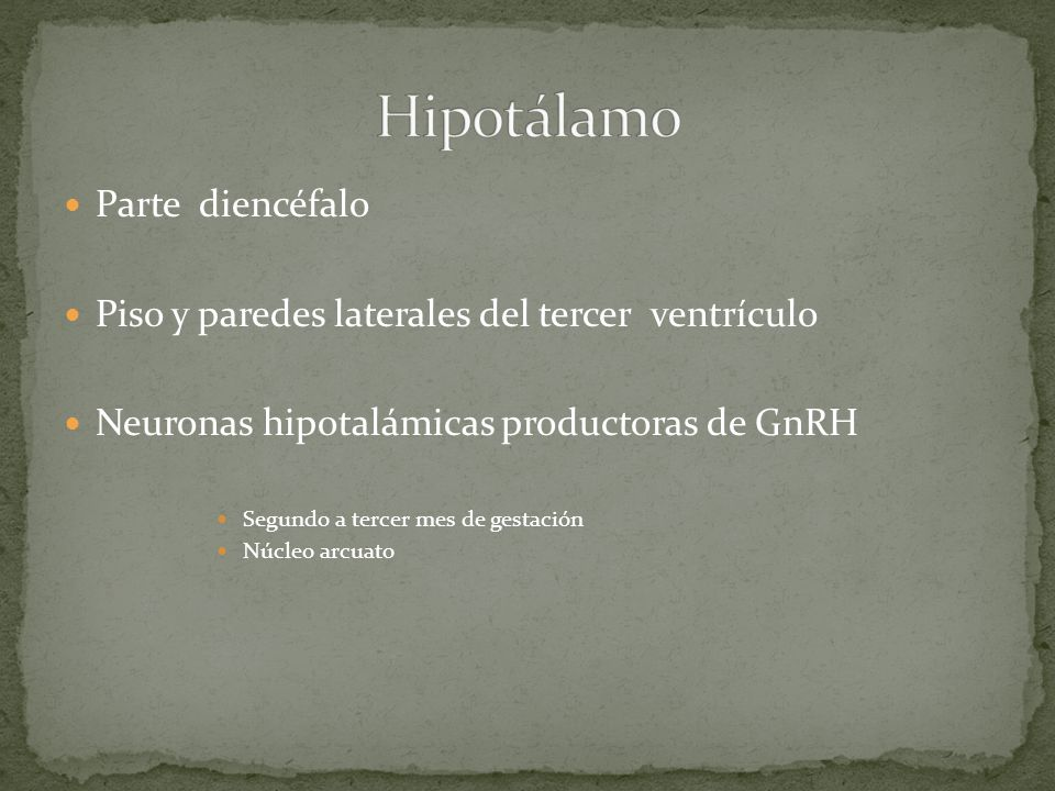 Hipotálamo Parte diencéfalo