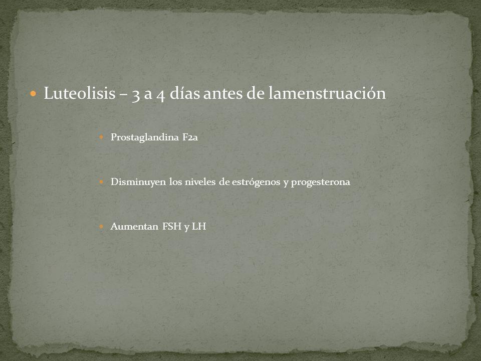 Luteolisis – 3 a 4 días antes de lamenstruación
