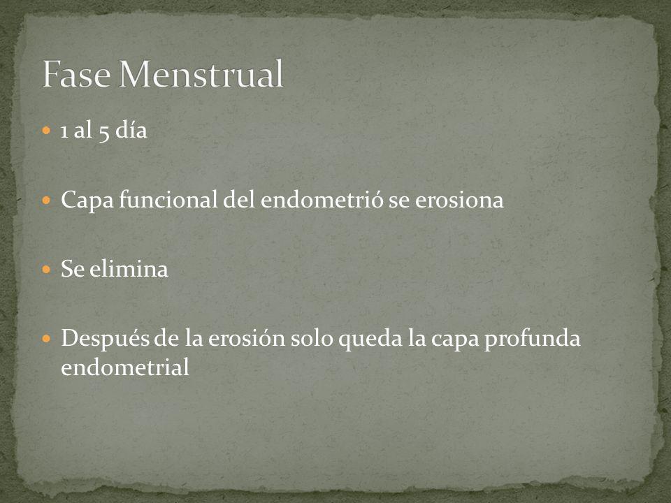 Fase Menstrual 1 al 5 día Capa funcional del endometrió se erosiona