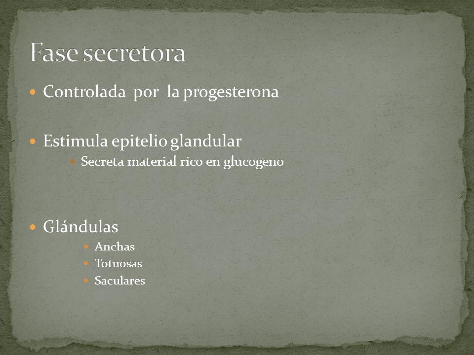 Fase secretora Controlada por la progesterona