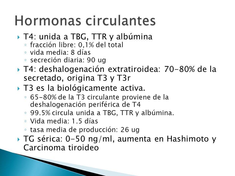 Hormonas circulantes T4: unida a TBG, TTR y albúmina