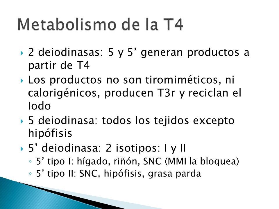 Metabolismo de la T4 2 deiodinasas: 5 y 5' generan productos a partir de T4.
