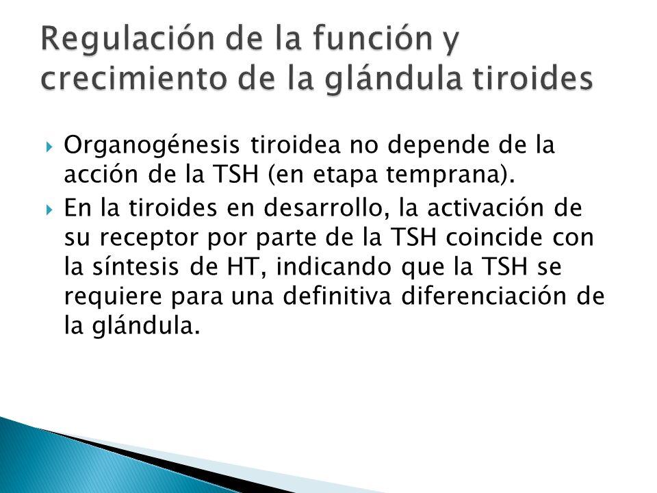 Regulación de la función y crecimiento de la glándula tiroides