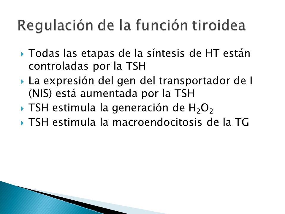 Regulación de la función tiroidea
