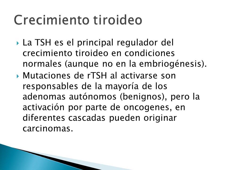 Crecimiento tiroideo La TSH es el principal regulador del crecimiento tiroideo en condiciones normales (aunque no en la embriogénesis).
