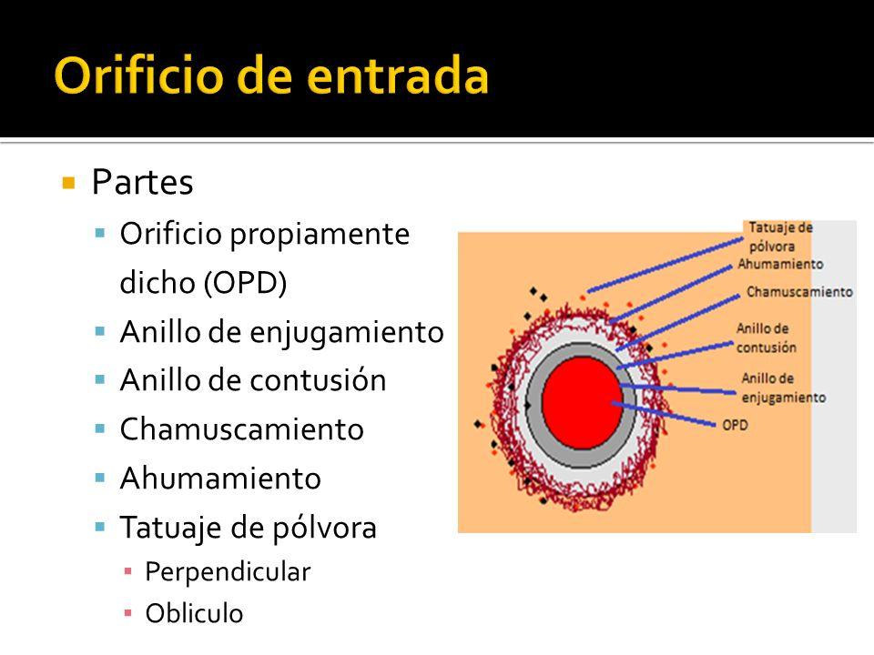 Orificio de entrada Partes Orificio propiamente dicho (OPD)