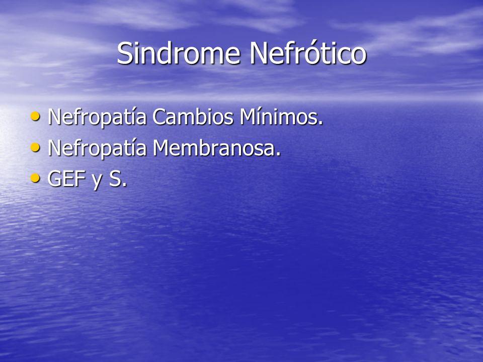 Sindrome Nefrótico Nefropatía Cambios Mínimos. Nefropatía Membranosa.