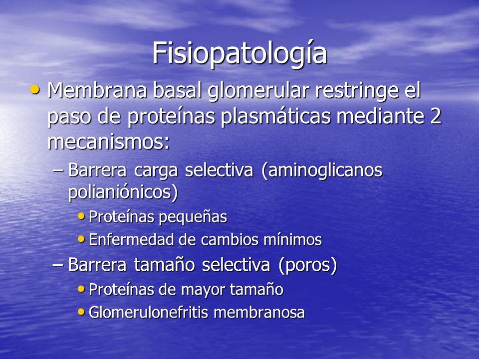 Fisiopatología Membrana basal glomerular restringe el paso de proteínas plasmáticas mediante 2 mecanismos: