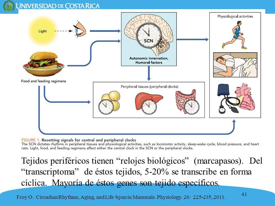 Tejidos periféricos tienen relojes biológicos (marcapasos)