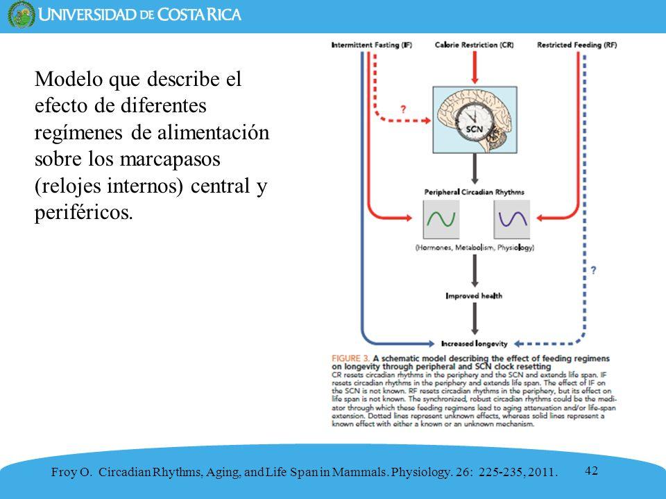 Modelo que describe el efecto de diferentes regímenes de alimentación sobre los marcapasos (relojes internos) central y periféricos.