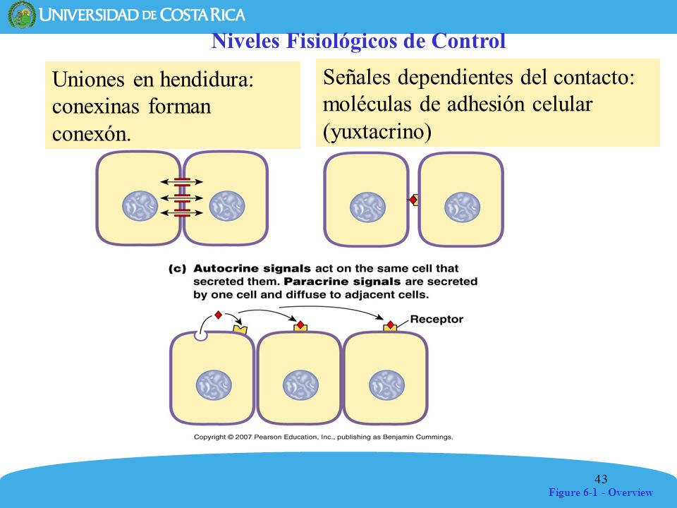 Niveles Fisiológicos de Control
