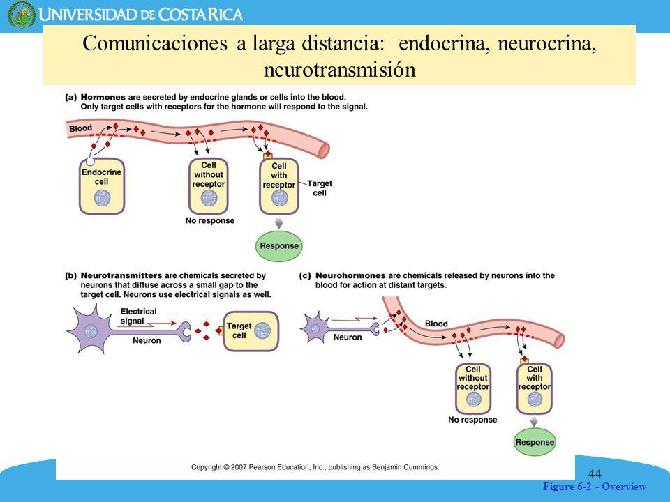 Comunicaciones a larga distancia: endocrina, neurocrina, neurotransmisión